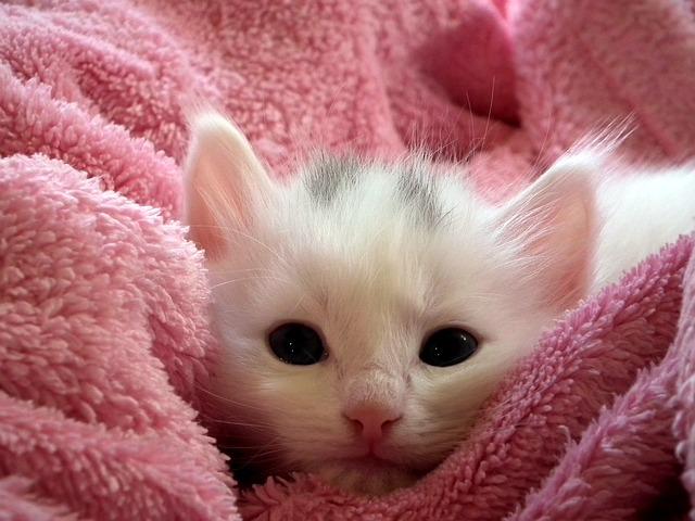 夢占い猫の夢