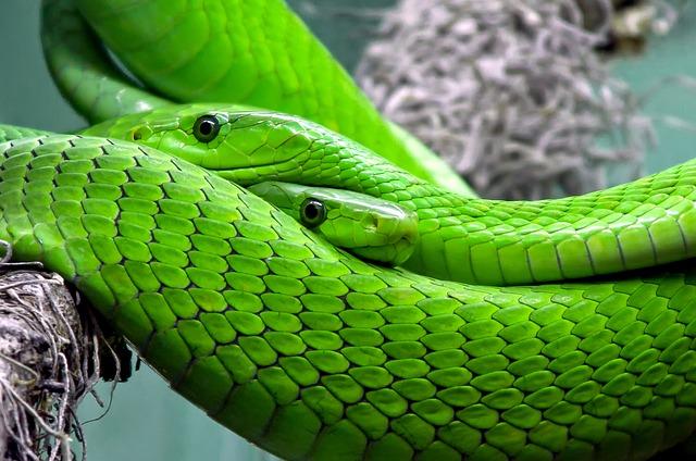夢占い蛇の夢