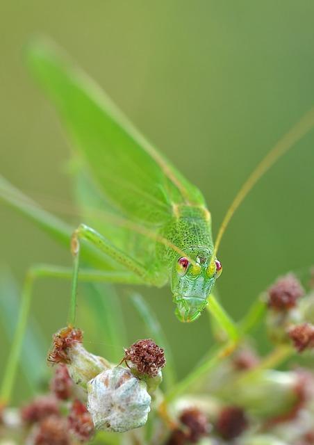 夢占いゴキブリの夢金色白色緑色