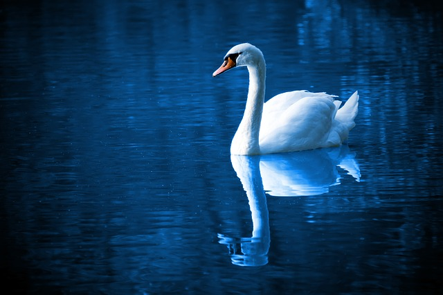 夢占い 空を飛ぶ夢 白鳥