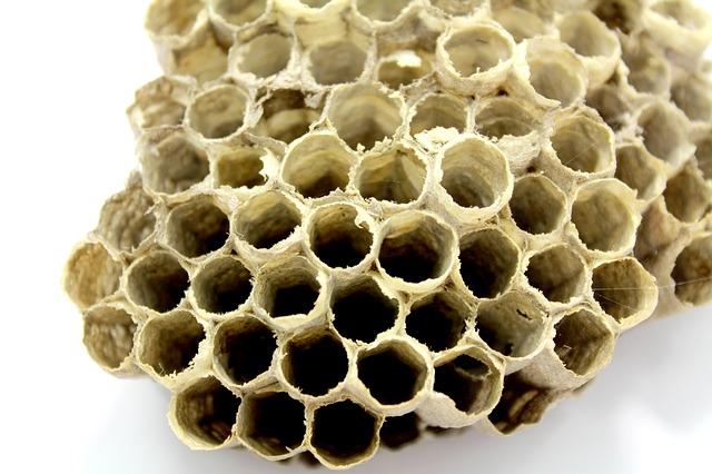 夢占い 蜂の夢 蜂の巣