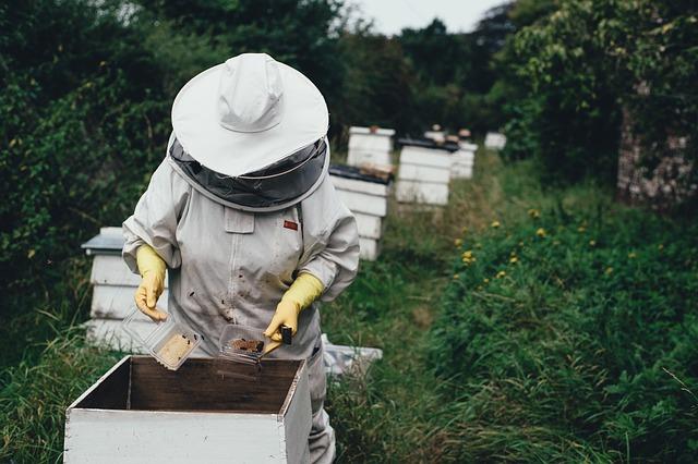 夢占い 蜂の夢