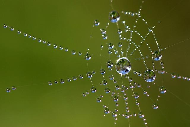 夢占い 蜘蛛の巣