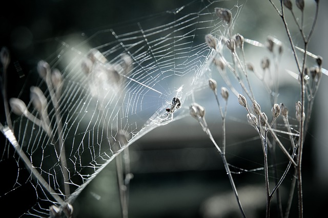 夢占い 蜘蛛の夢