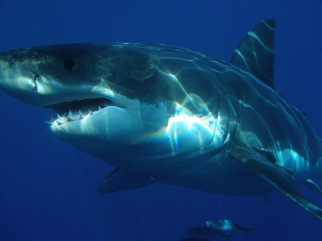 襲 われる 夢 サメ に