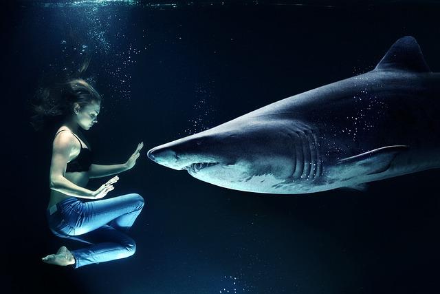 サメの夢占い