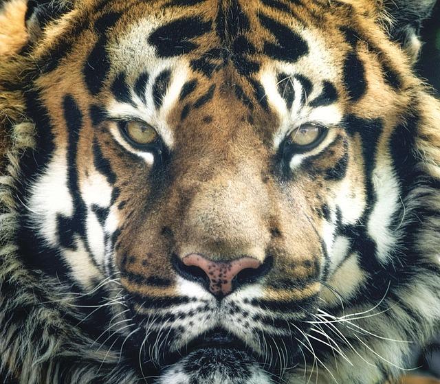 虎の夢占い