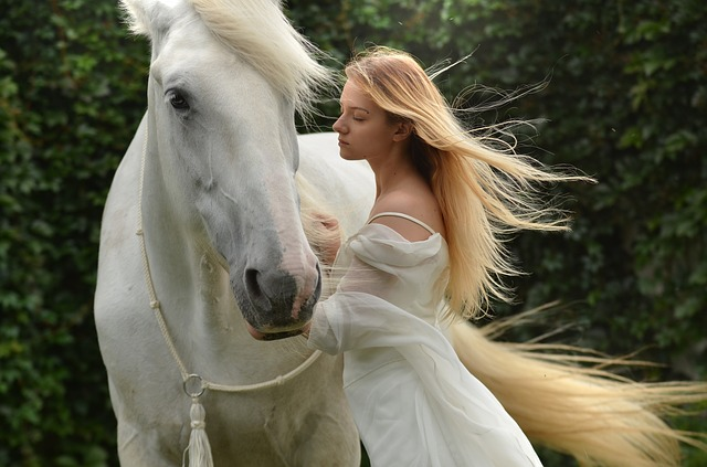 馬の夢占い