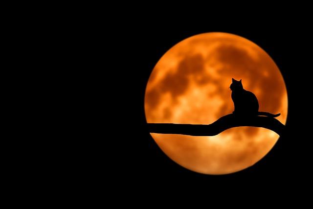 月の夢占い