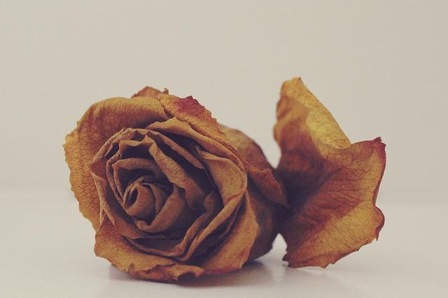 花の夢占い