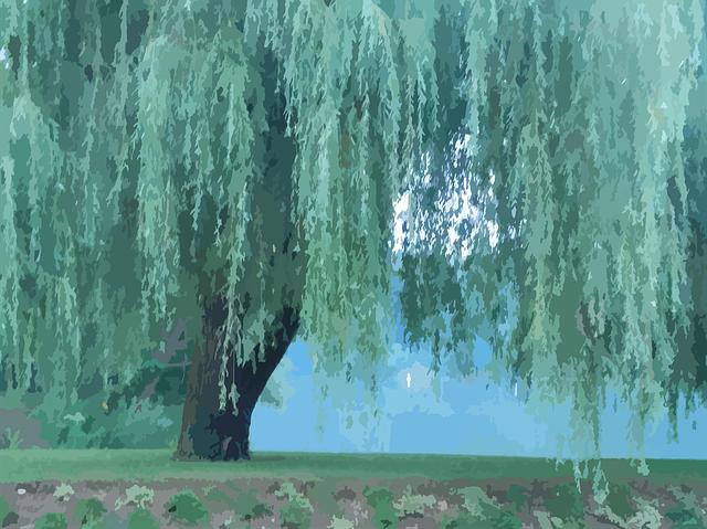 木の夢占い