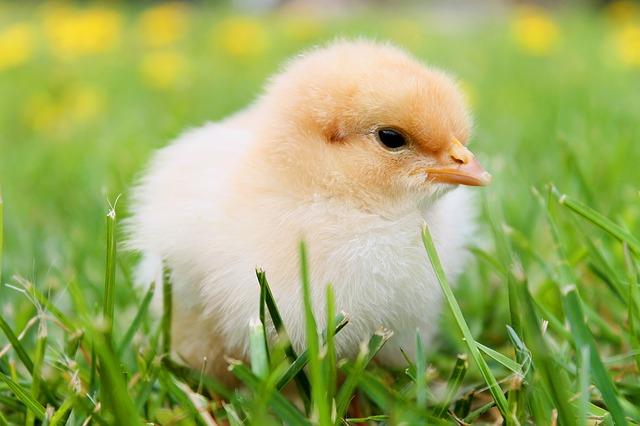 卵の夢占い